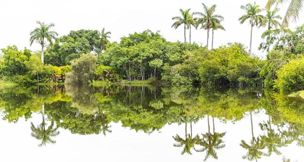 Beau parc avec nature tropicale et palmiers