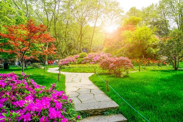 Beau parc verdoyant