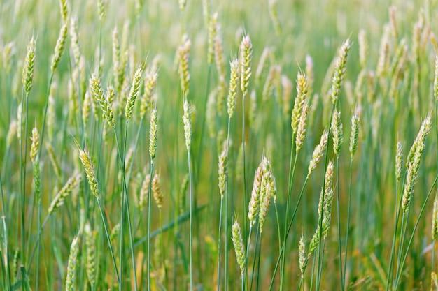 Beau paysage agricole