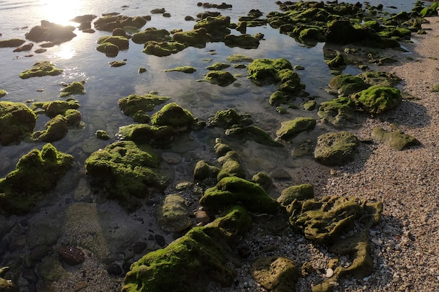 Beau paysage d'après-midi à wediombo beach wediombo beach est situé à gunung kidul yogyakarta indonésie