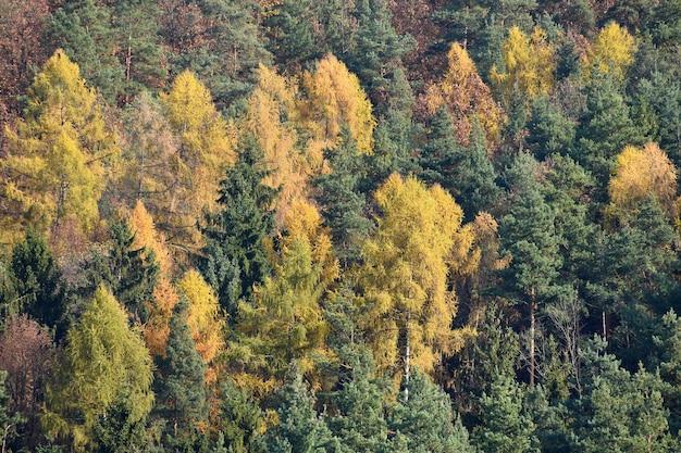 Beau paysage avec des arbres d'automne magiques