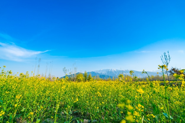 Beau paysage d'arbres et de montagnes enneigées état du cachemire, inde