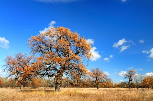Beau paysage d'automne grand arbre à feuilles caduques
