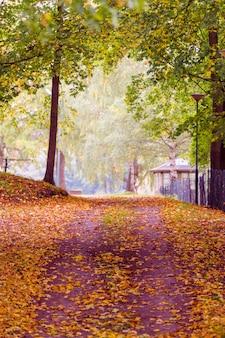 Beau paysage d'automne. parkway en perspective avec des arbres toujours en vert