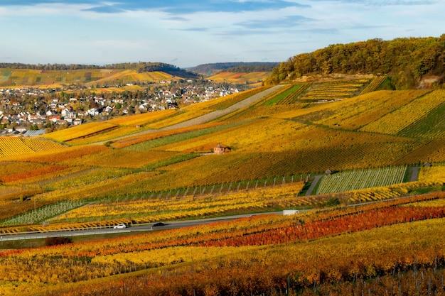 Beau paysage d'automne avec des vignobles colorés