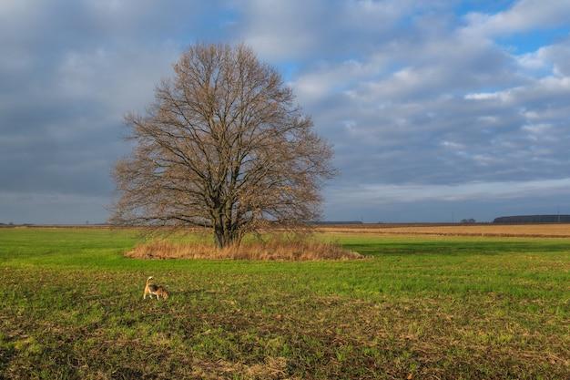 Beau paysage d'automne avec vue sur un chêne à feuillage jaune dans un champ vert le matin
