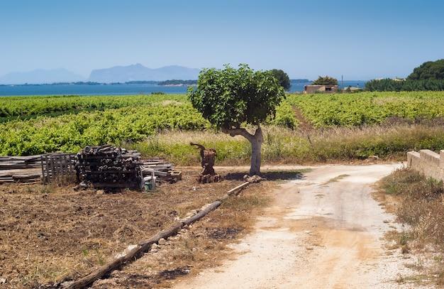 Beau paysage de champ sicilien