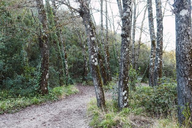 Beau paysage d'un chemin vert dans la forêt d'arbres