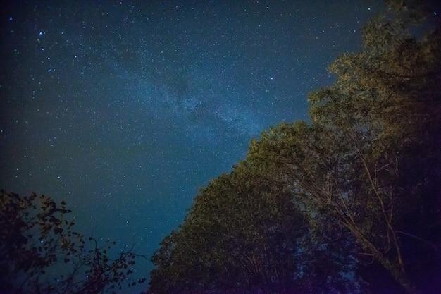 Beau paysage de ciel nocturne avec des étoiles et des arbres