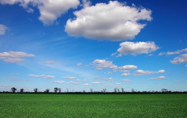 Beau paysage avec ciel nuageux et herbe verte