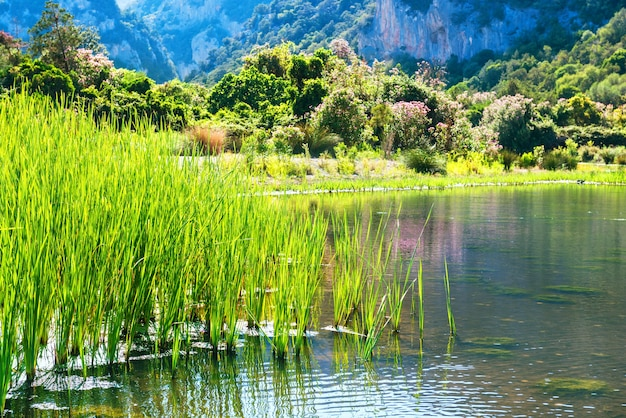Beau paysage sur la côte du lac avec des fleurs, de l'herbe verte et des montagnes en arrière-plan