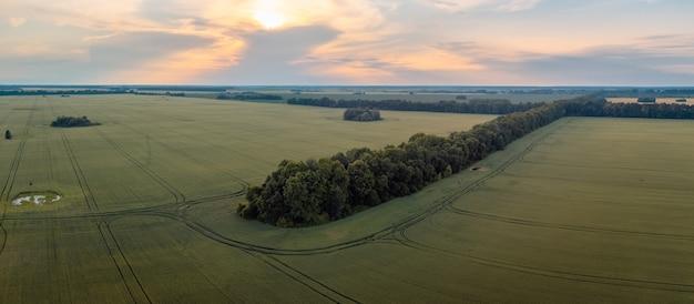 Beau paysage de drone de champ de seigle à la campagne