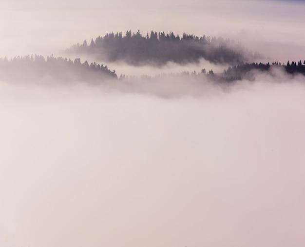 Beau paysage du matin avec la forêt dans le brouillard. paysage brumeux dans les montagnes.