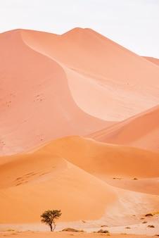 Beau paysage de dunes de sable dans le désert de namibie, sossusvlei, namibie
