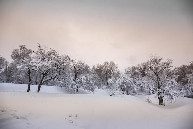 Beau paysage enneigé d'hiver dans le parc