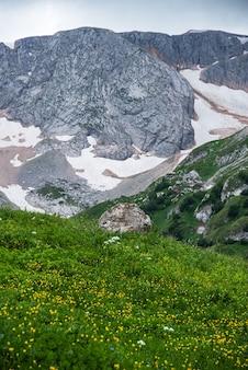 Beau paysage d'été par temps nuageux dans les montagnes avec des fleurs et de la neige