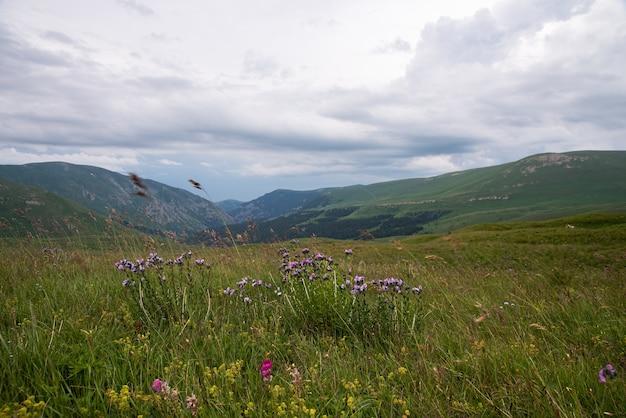 Beau paysage d'été par temps nuageux dans les montagnes avec des fleurs
