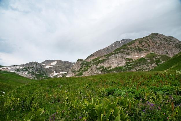 Beau paysage d'été par temps nuageux dans une vallée de montagne avec des fleurs et de la neige