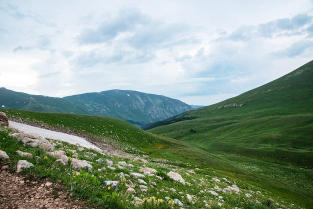Beau paysage d'été par temps nuageux dans une vallée de montagne avec des fleurs