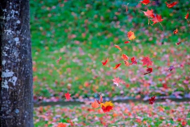 Beau paysage avec des feuilles d'érable