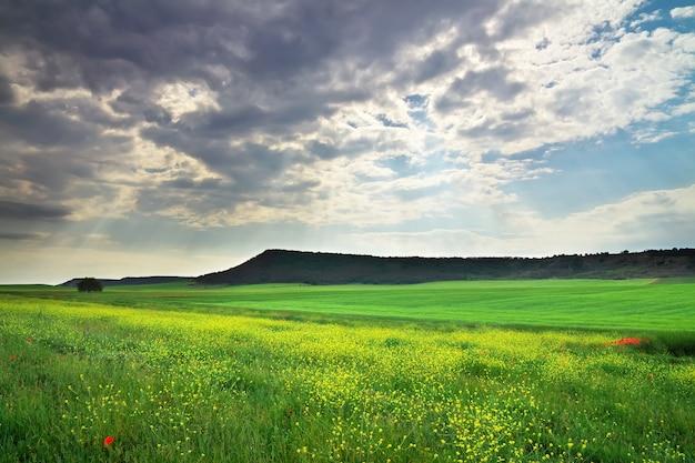 Beau paysage avec fleurs, plantes et montagne. prairie fleurie de printemps. composition de la nature.