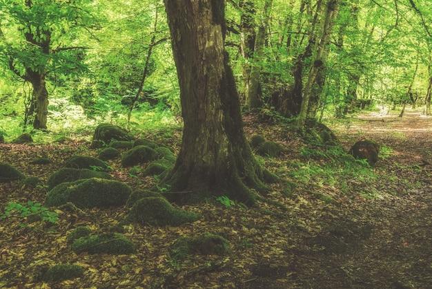 Beau paysage de forêt à feuilles caduques verte