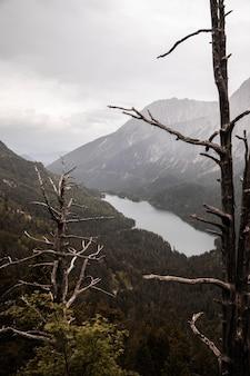 Beau paysage de forêt de montagne