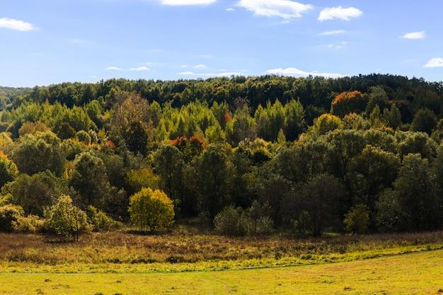 Beau paysage de forêt verte. forêt dans les collines. journée ensoleillée