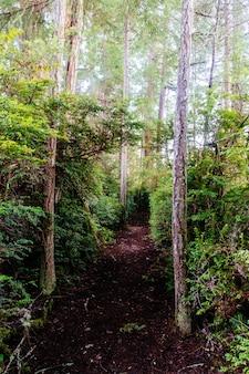 Beau paysage d'une forêt