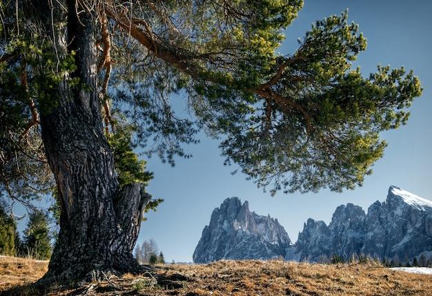 Beau paysage de hautes falaises rocheuses et d'arbres couverts de neige dans les dolomites