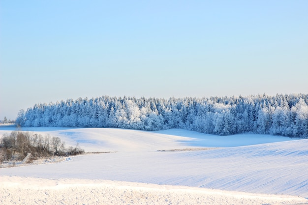 Beau paysage d'hiver avec forêt, arbres