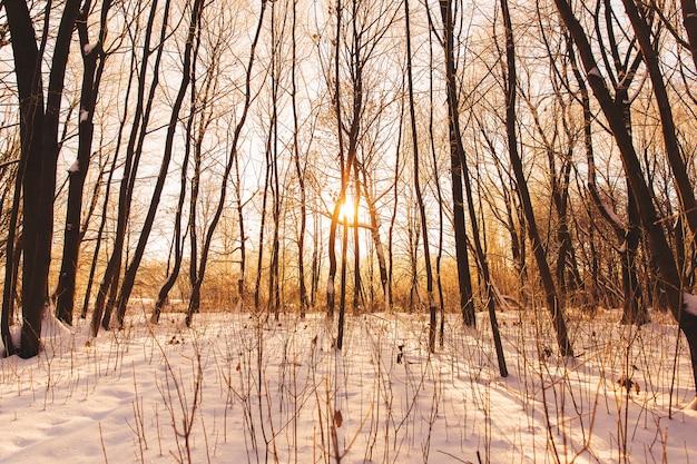 Beau paysage d'hiver. sombres silhouettes d'arbres dans la forêt enneigée à la lumière du coucher du soleil orange
