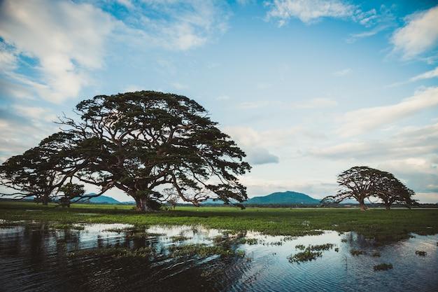 Un beau paysage avec un lac, un arbre et des montagnes. lac de la forêt sous le ciel bleu nuageux