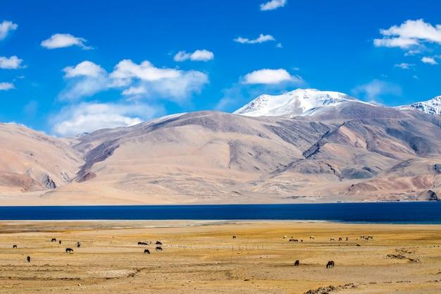 Beau paysage, lac tso moriri sur une journée ensoleillée claire avec fond de montagne