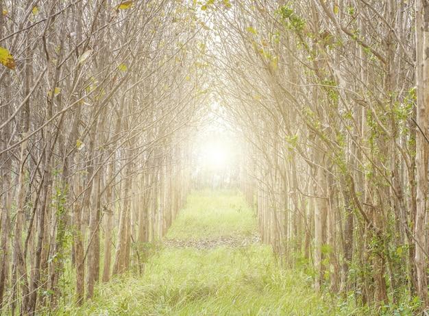 Beau paysage, lever de soleil dans la forêt