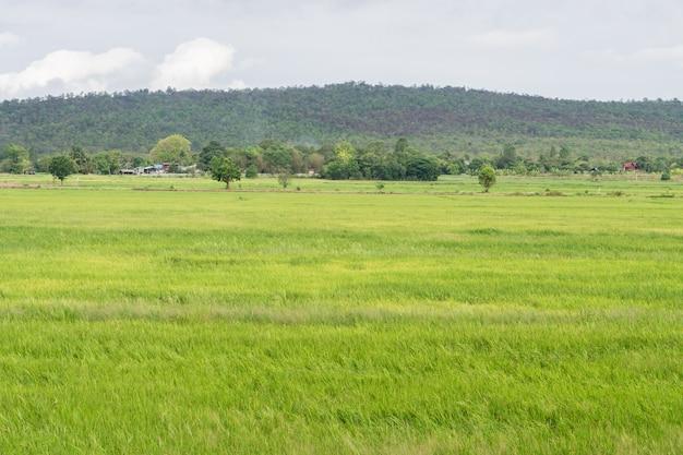 Beau paysage de montagne sur la campagne pour le fond