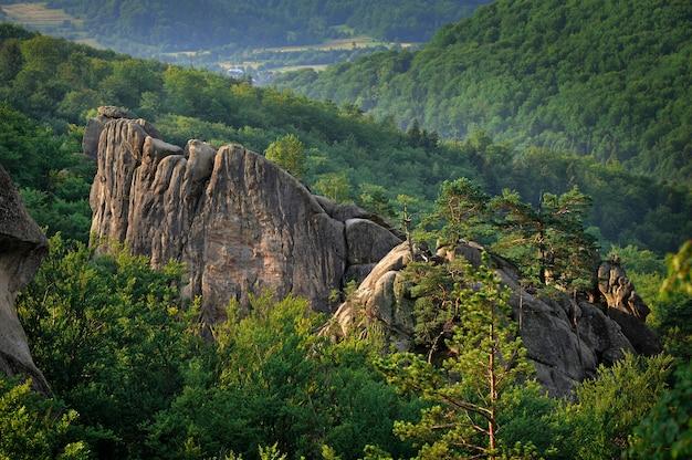 Beau paysage de montagne des carpates
