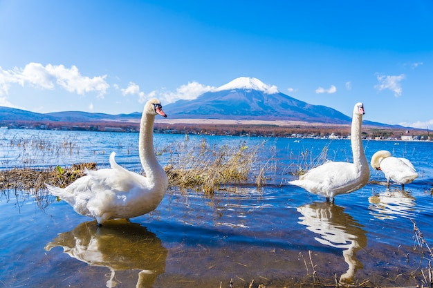 Beau paysage de montagne fuji autour du lac yamanakako
