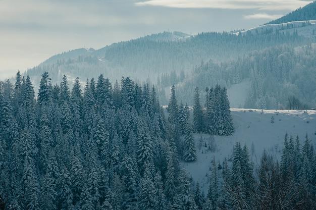 Beau paysage de montagne d'hiver avec forêt