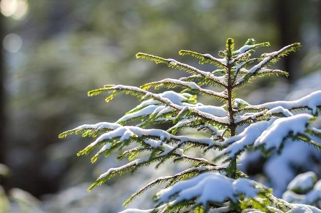 Beau paysage de montagne d'hiver de noël incroyable.