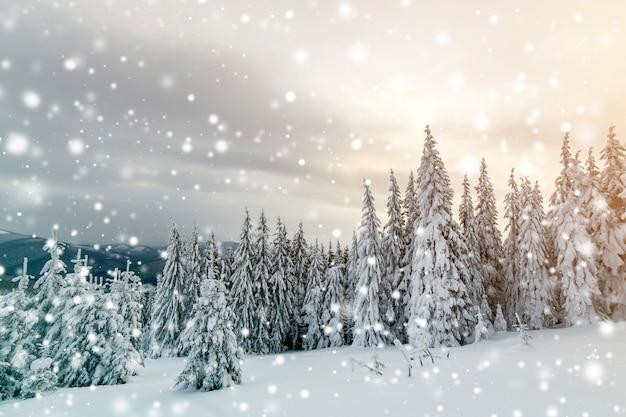 Beau paysage de montagne d'hiver