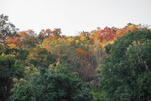Beau paysage de montagne magnifique forêt d'automne avec des feuilles colorées dans la nature