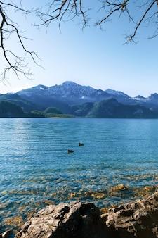 Beau paysage de montagne avec des oiseaux flottants.