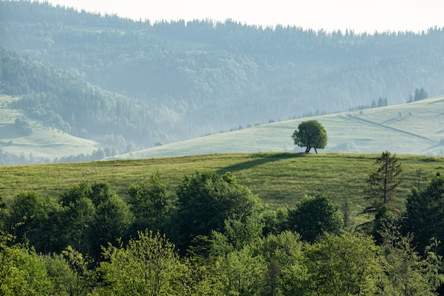Beau paysage de montagne par temps couvert. arbre solitaire sur une colline.
