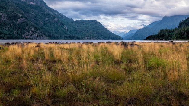 Beau paysage avec des montagnes