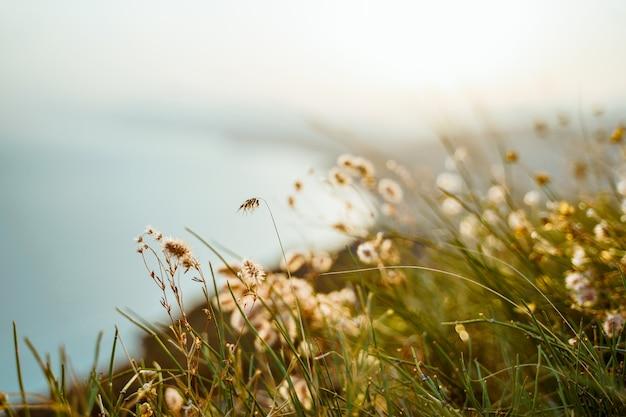Beau paysage naturel avec de l'herbe duveteuse au premier plan au sommet des montagnes