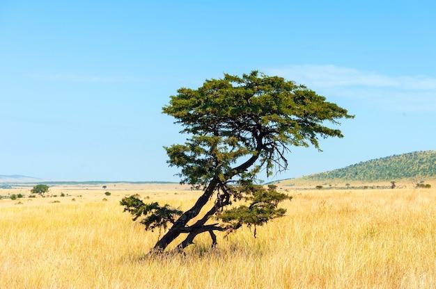 Beau paysage avec personne arbre en afrique
