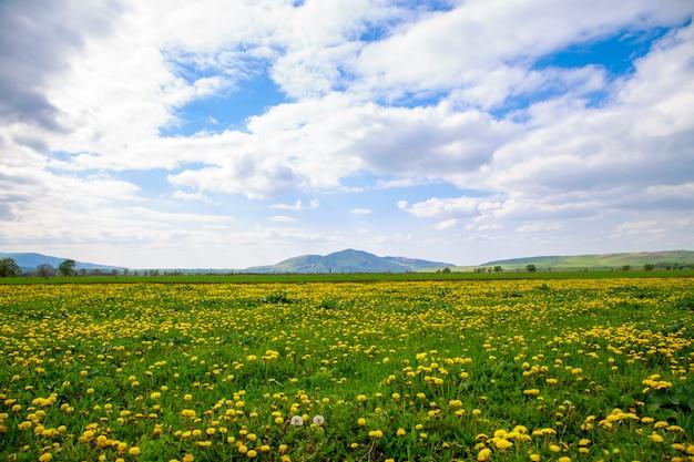 Beau paysage de printemps et d'été.