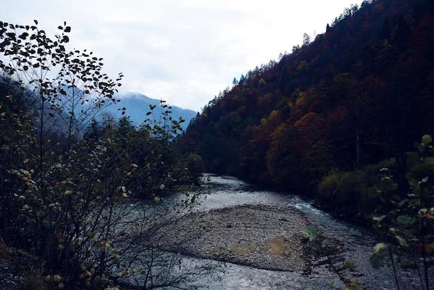 Beau paysage de la rivière dans la forêt