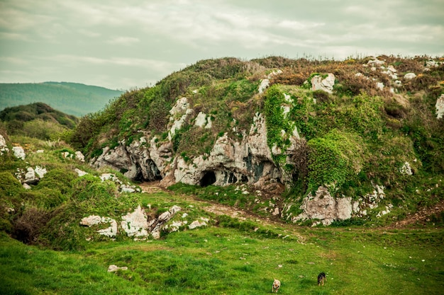 Beau paysage avec des rochers couverts de verdure, des grottes et des chiens